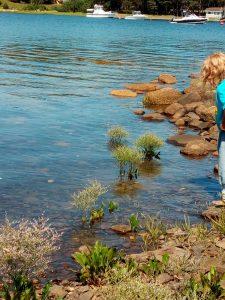 Wasserpflanzen und Steine am Meer