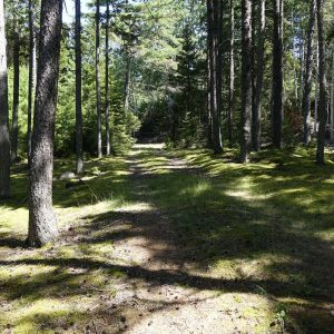 schöner grüner Weg im Wald