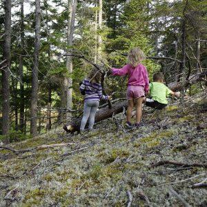 drei Kinder spielen an einem Baum im Wald