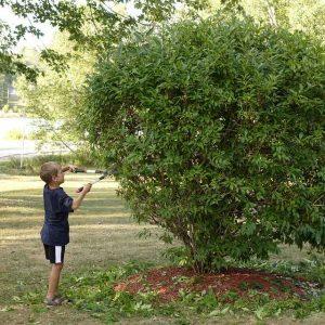 Junge schneidet mit Heckenschere den Busch