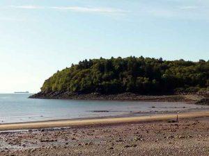 Strand und Wald im Hintergrund